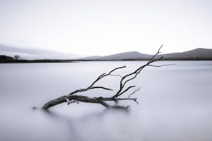 branch in water on lough beltra