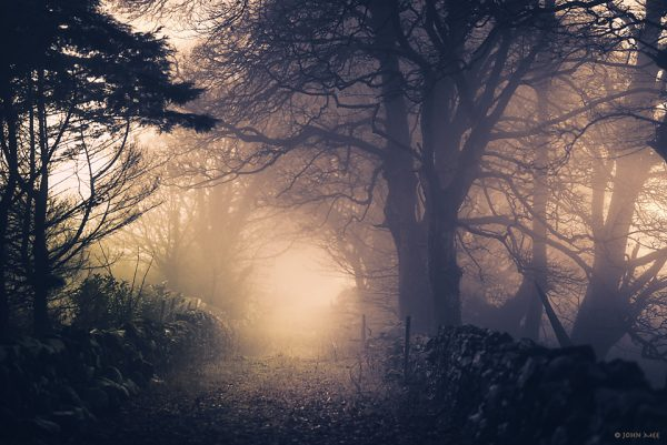 Boreen on a foggy morning