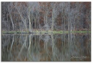 Reflected trees by stephanie Johnson