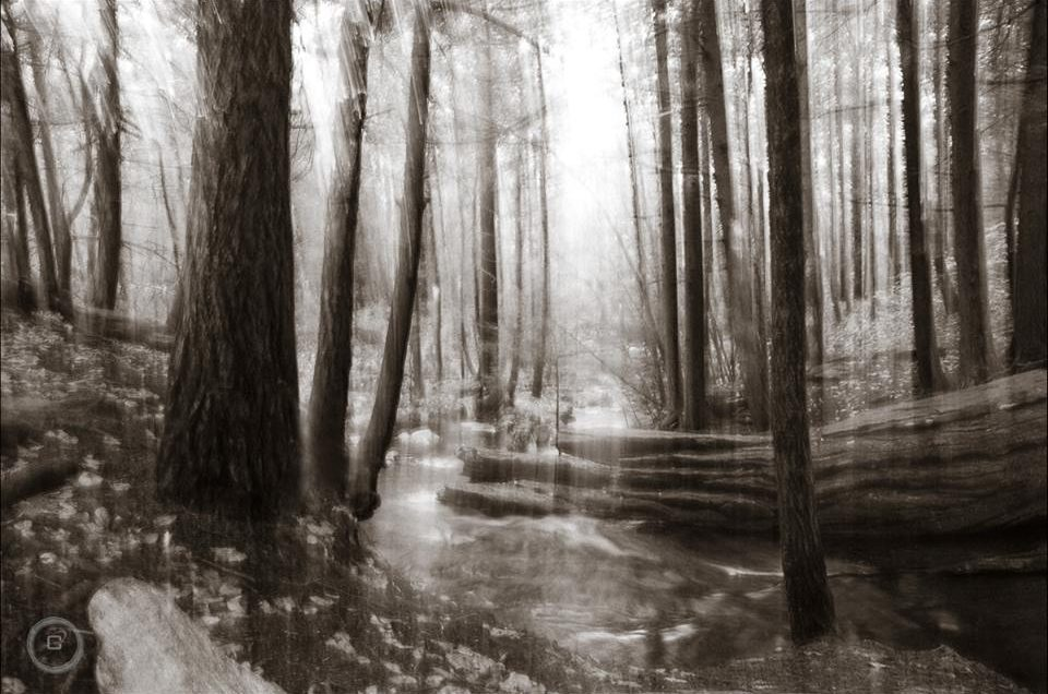 Black and white woodland
