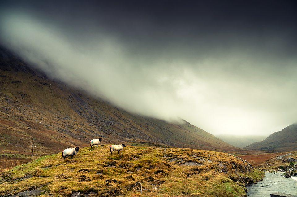 Sheep on the mountain