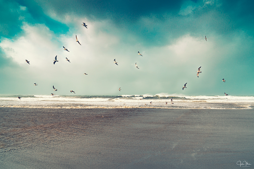 Birds hovering in the windy weather